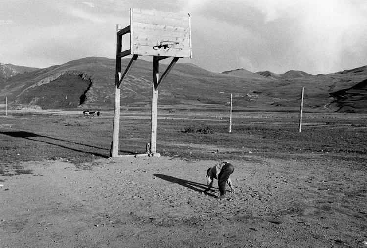 14 basketball.png