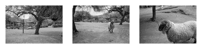 Sheep-leveled.png