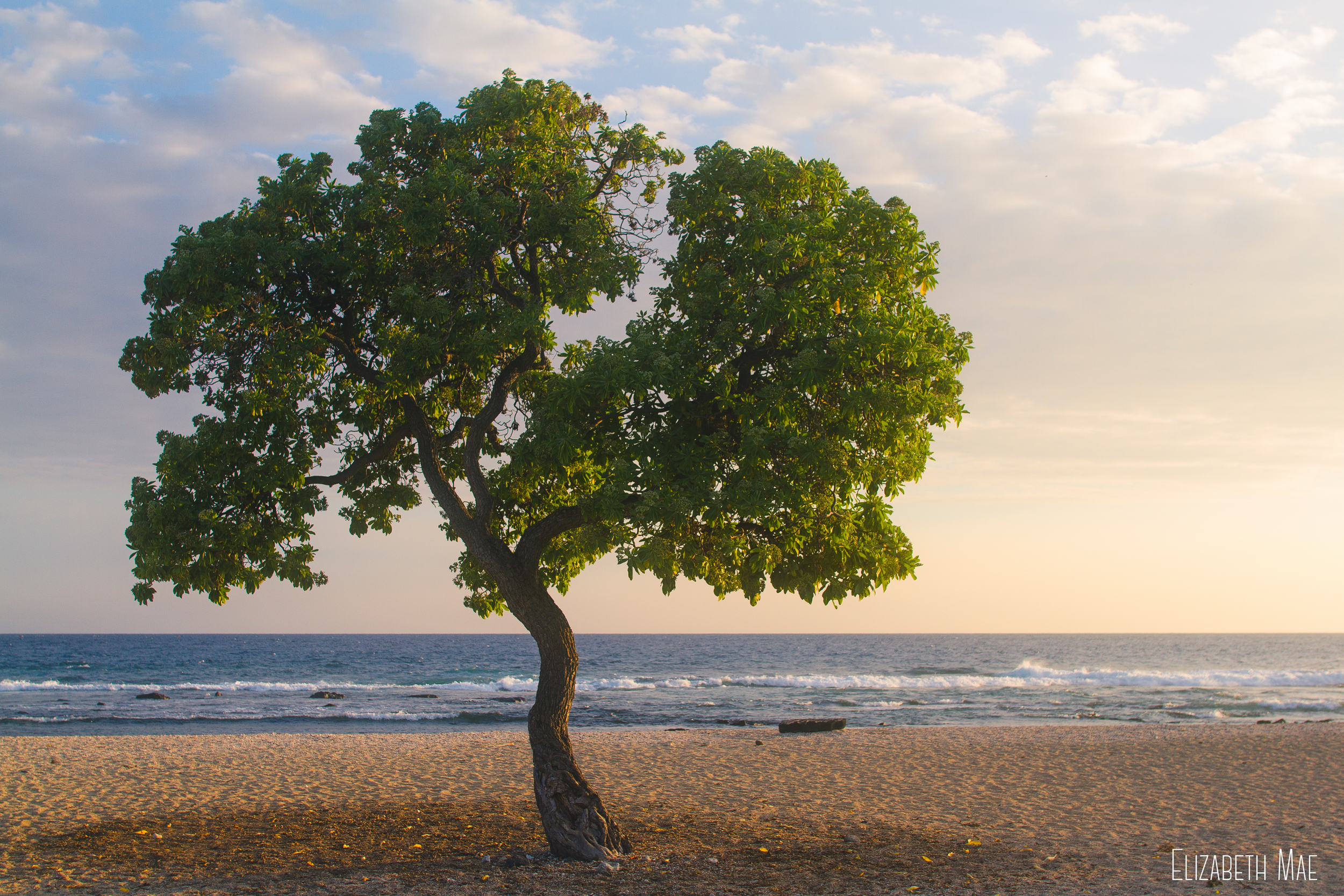 These trees looked so beautiful against the ocean and the sand. It was almost unreal.