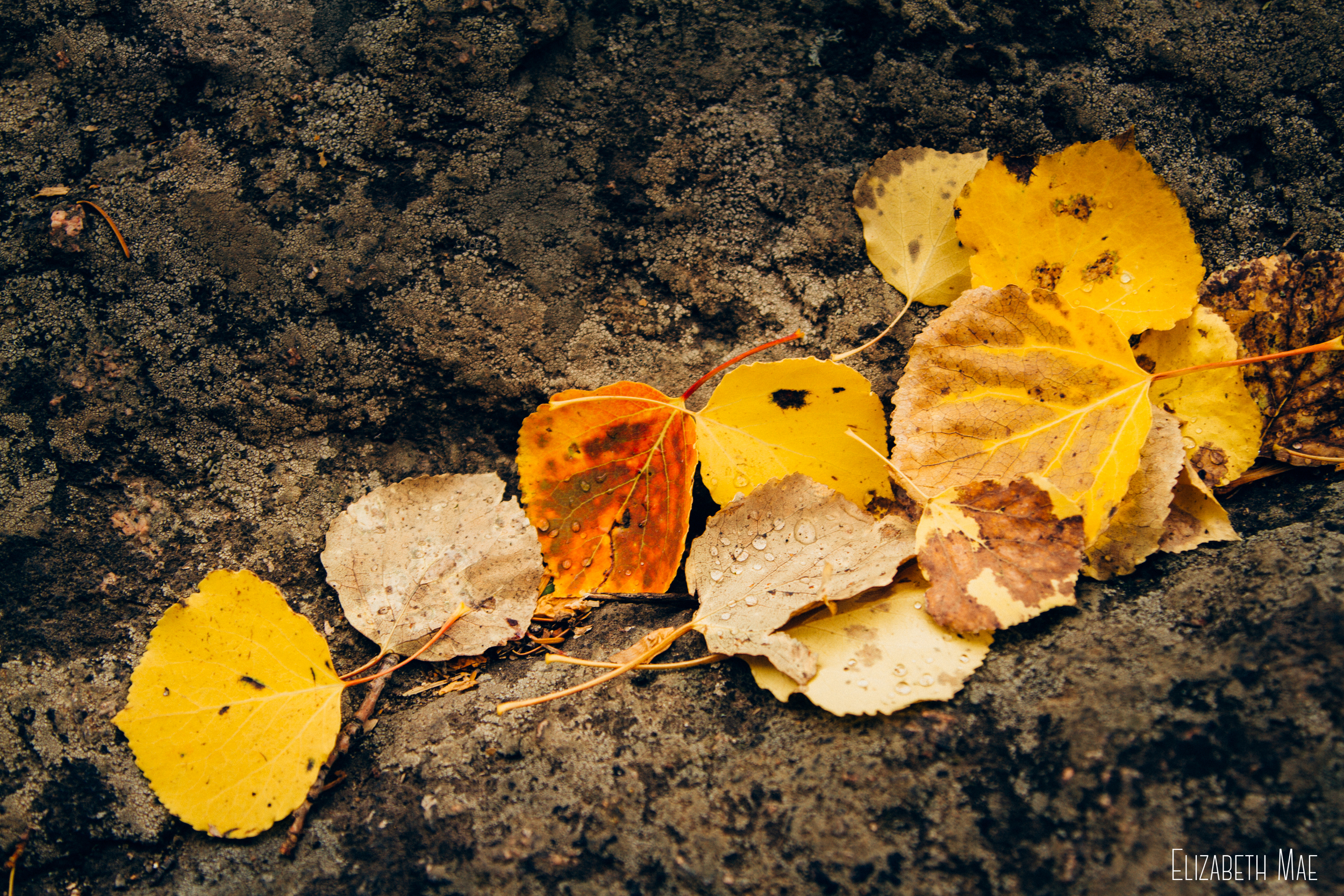 autumn-rocky-mountain-national-park