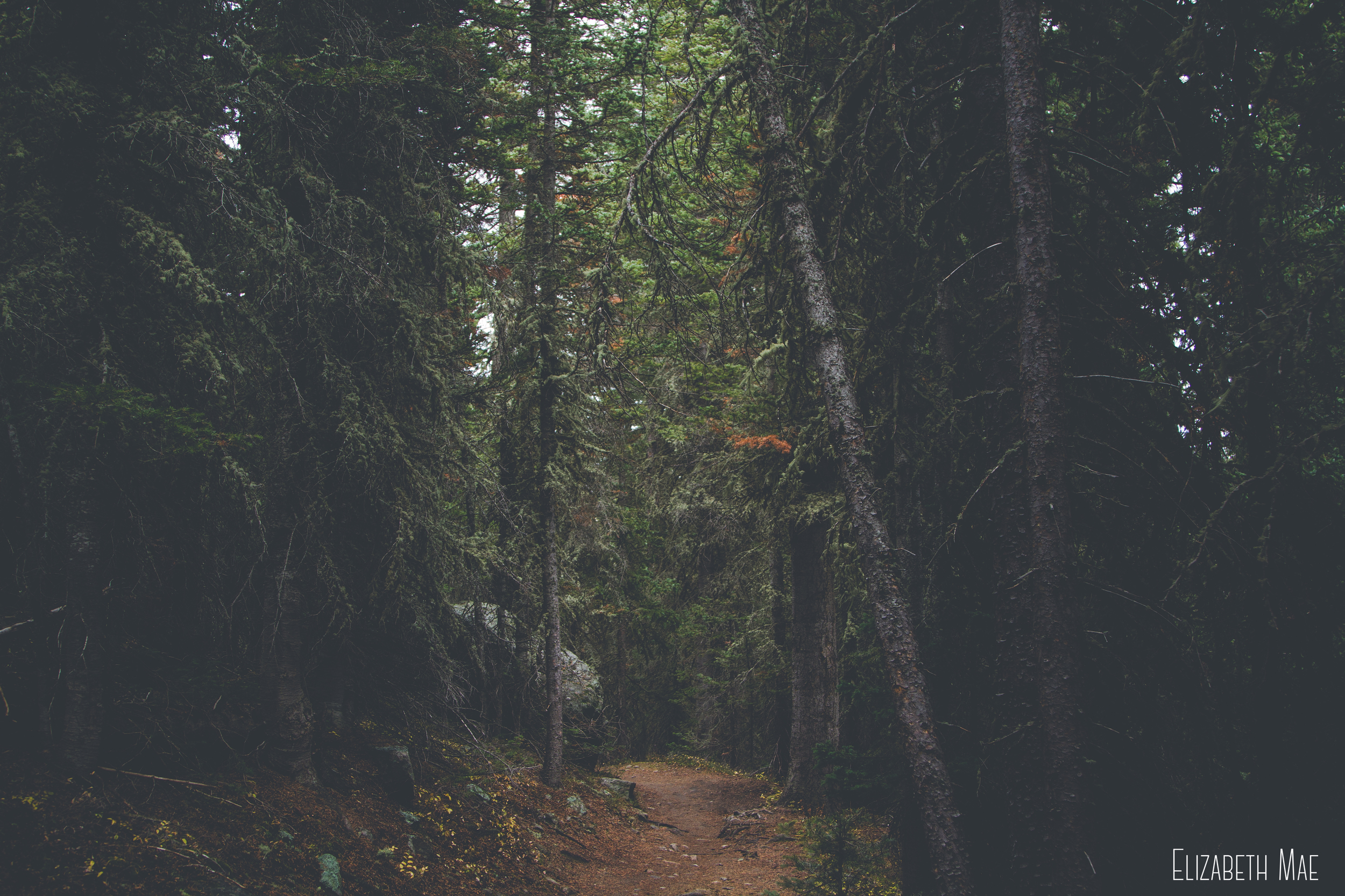 forest-trail-rocky-mountain-national-park