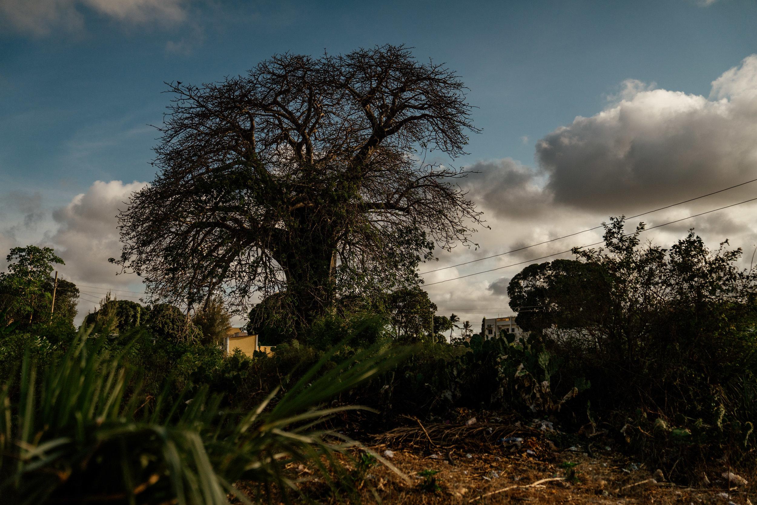 Malindi, Kenya-226.jpg