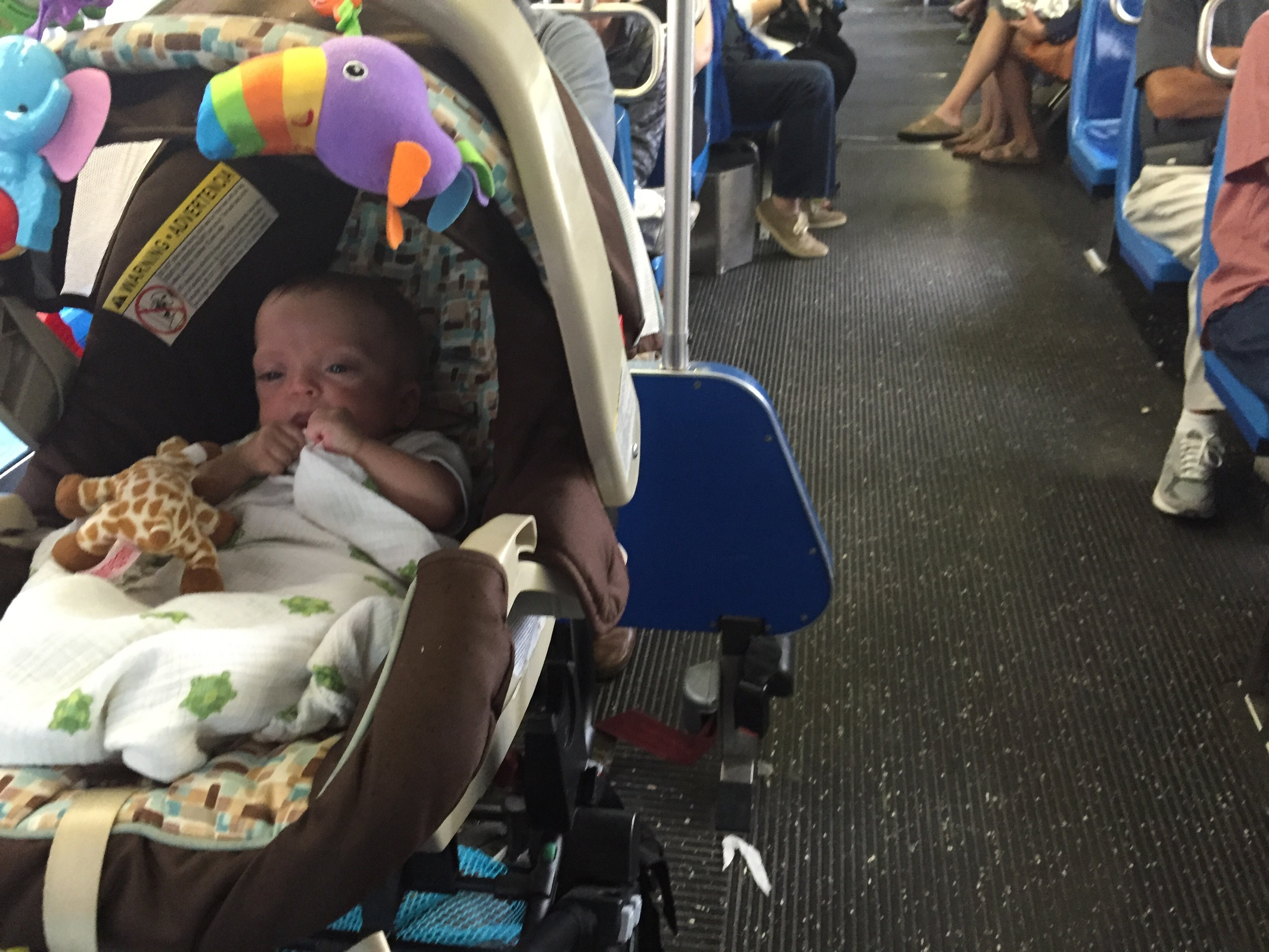 Lucie's first trip on the bus! Such a New Yorker!