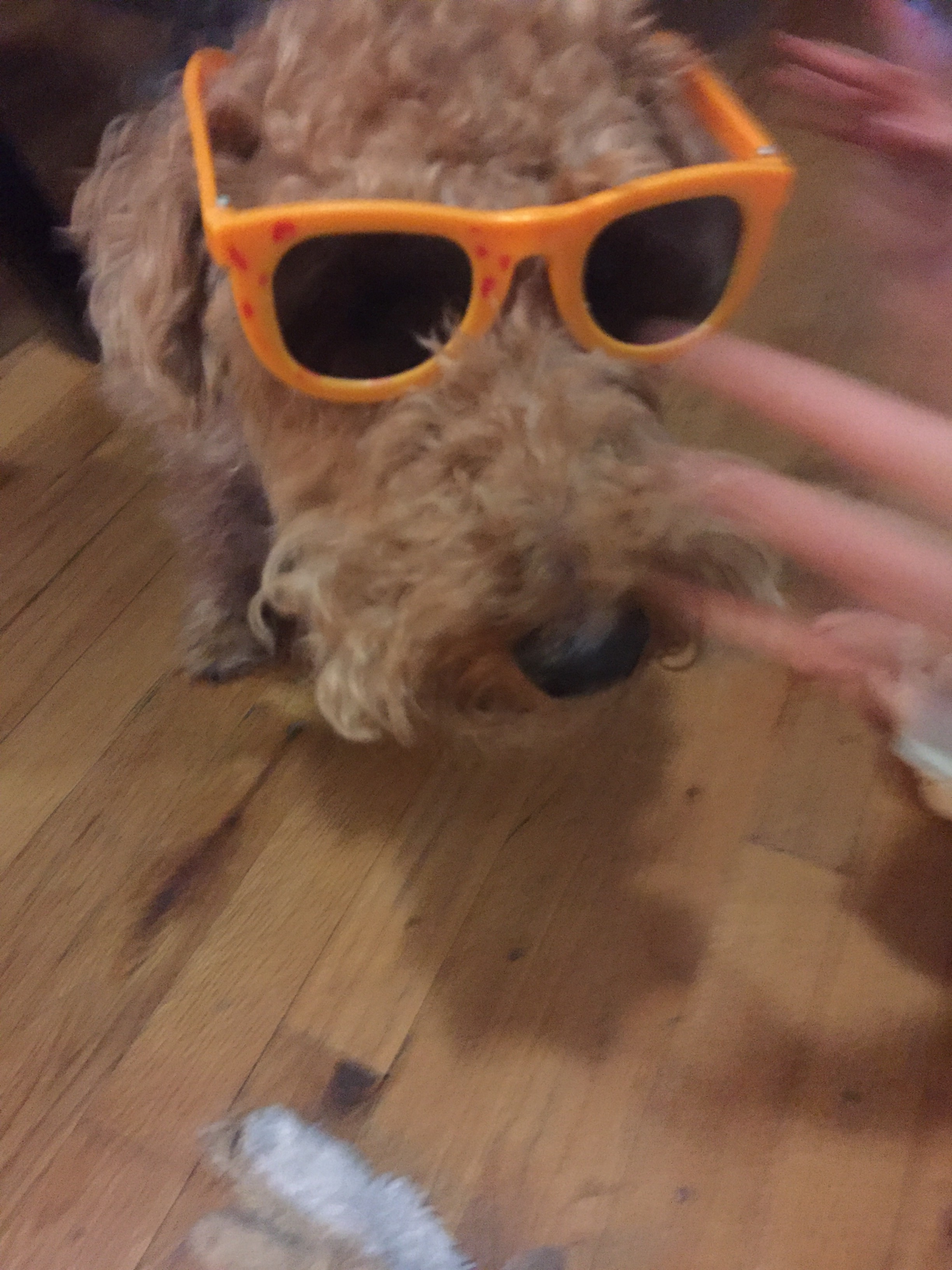 Lucie and Bessy playing with some wild shades.