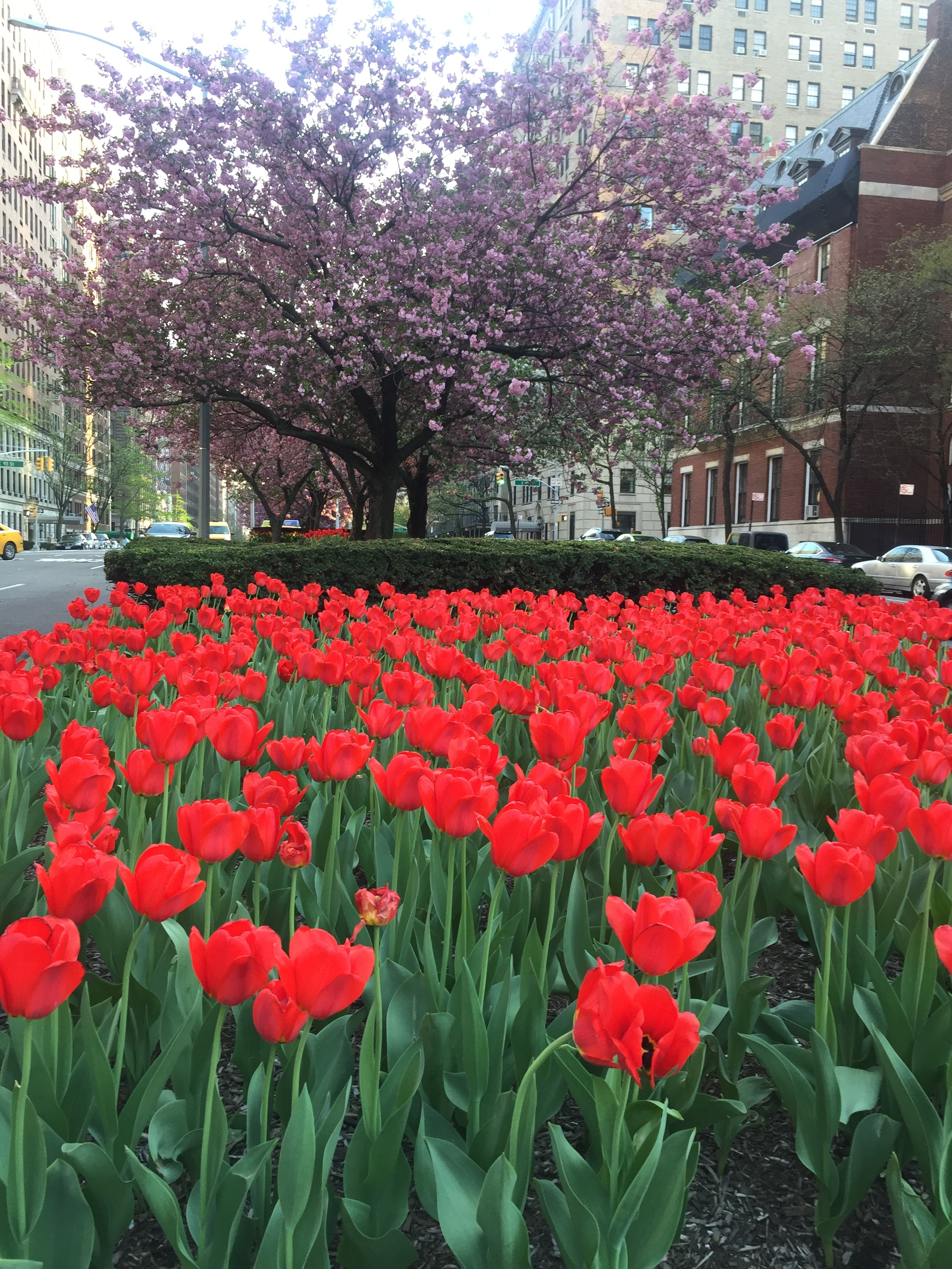 I'm kind of obsessed with the tulips on Park. I took this on a run and did not edit the color at all. What a gift to live in this City!