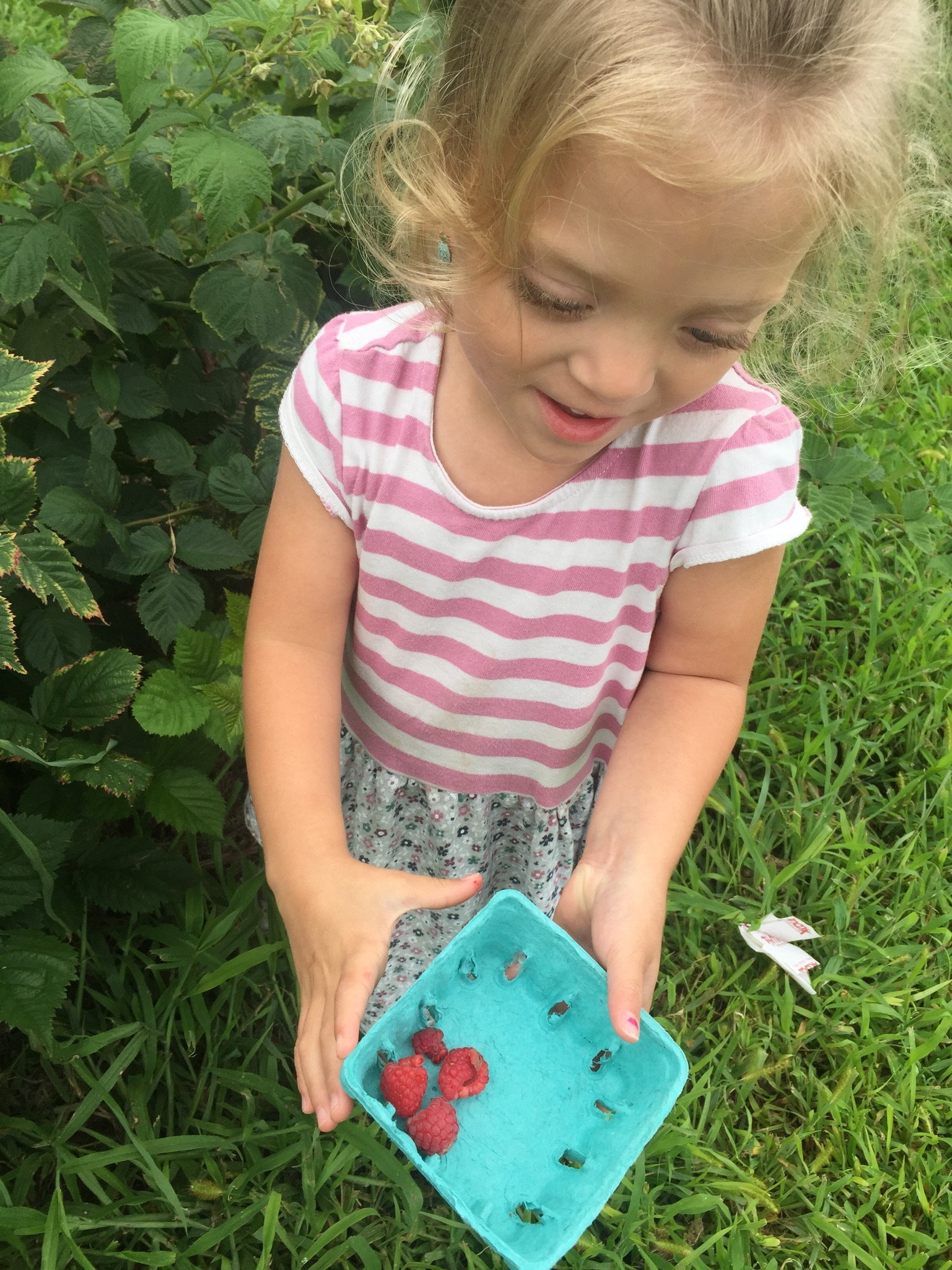 I took the next week off and Lucie and I went on adventures throughout the week with our fun housemates, Coach D's Family, Abigail and Ezekiel. Our first adventure was a small berry farm where we picked sweet raspberries and perfect blackberries.