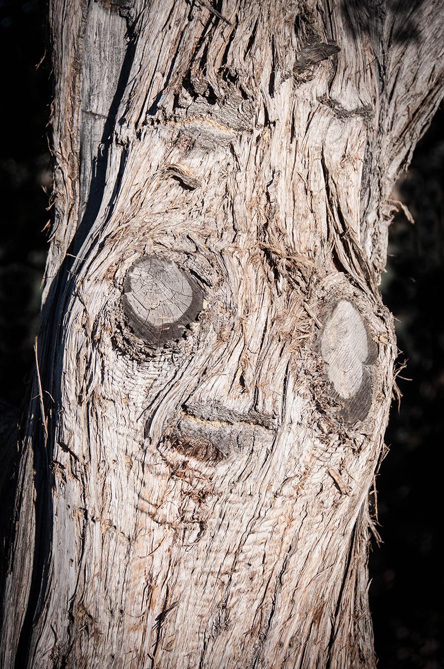 Our juniper tree campsite guardian