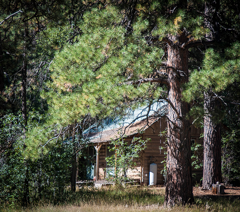An old cabin in the forest.