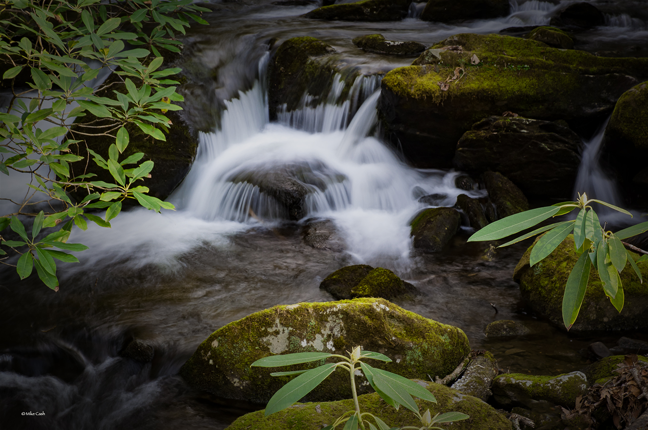 Budding rhododendrons over a stream.