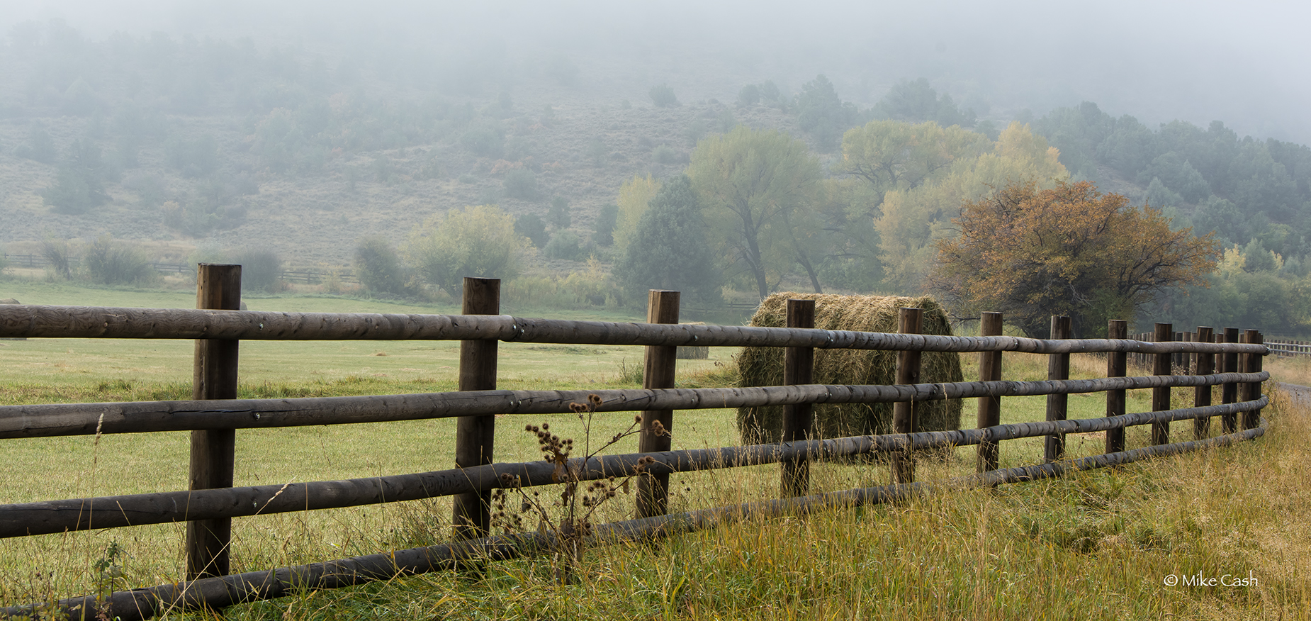 Fence and fog.