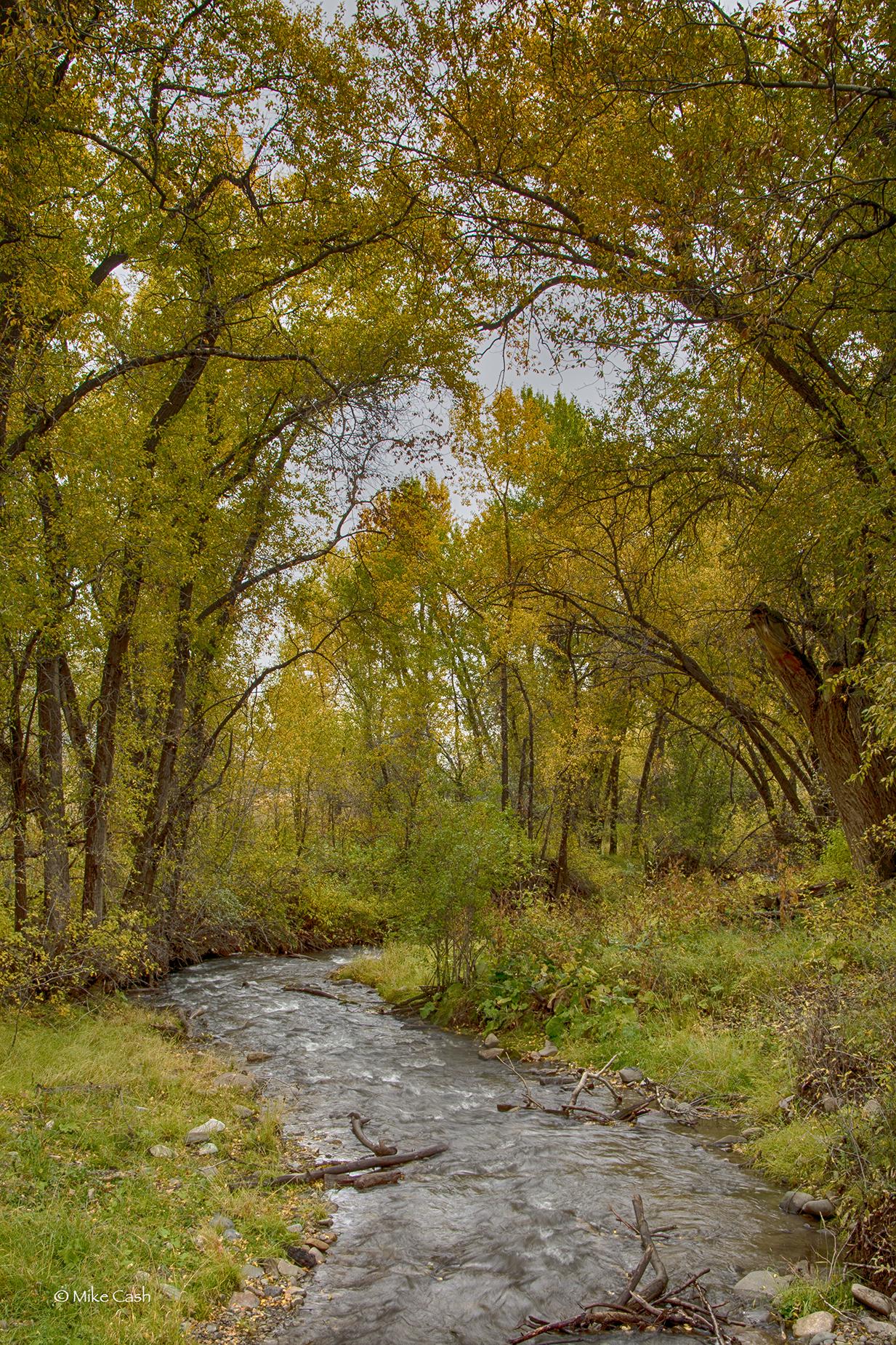 Stream in Fall Color