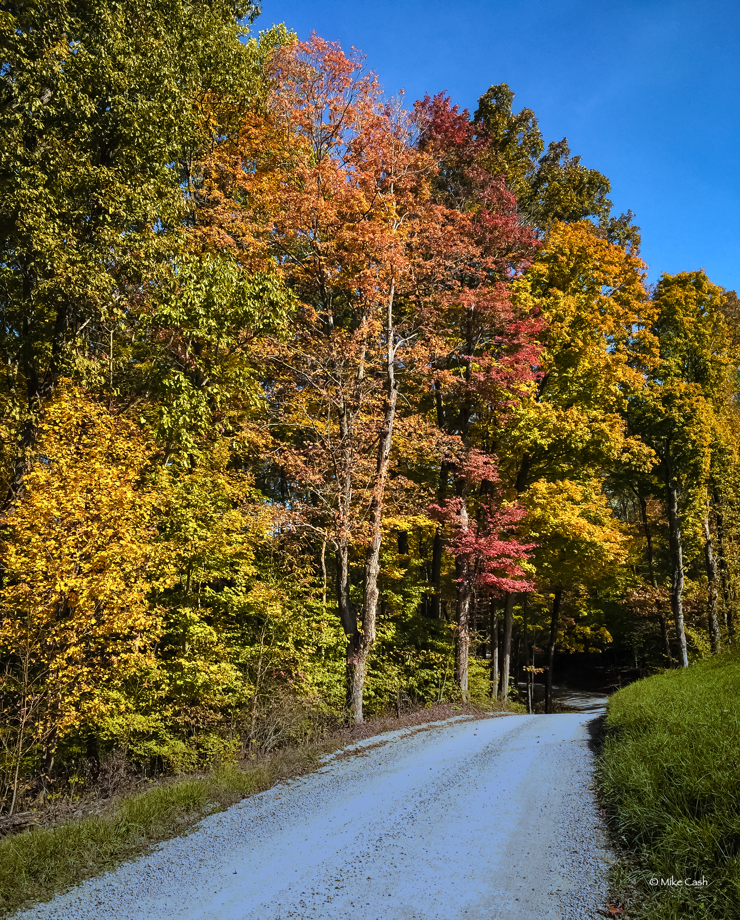 Color along the road in Owen-Putnam State Forest.