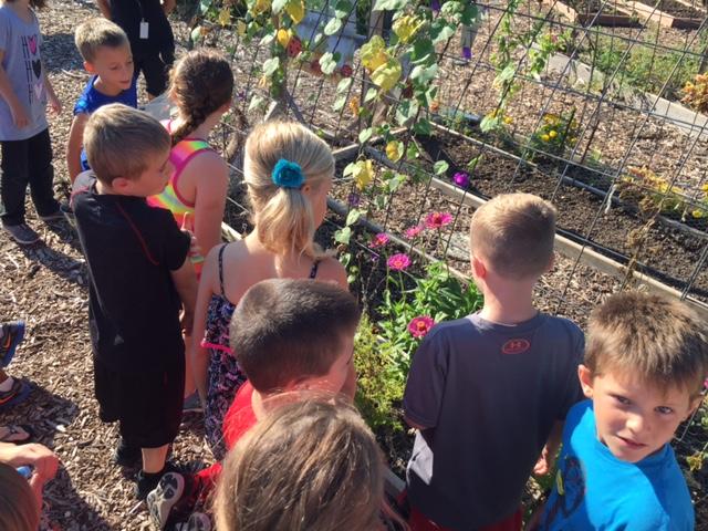 Kindergarten Watching Butterflies