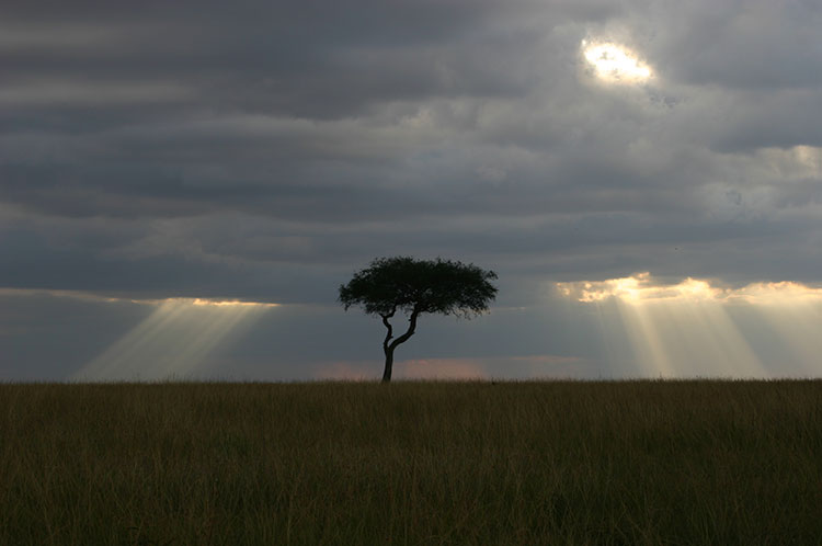 environment-dusk.JPG