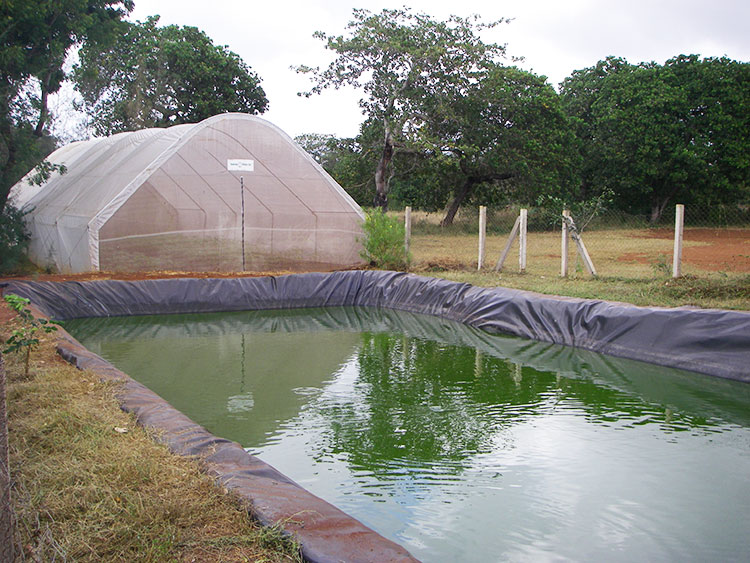 Greenhouse-and-Fishpond.jpg