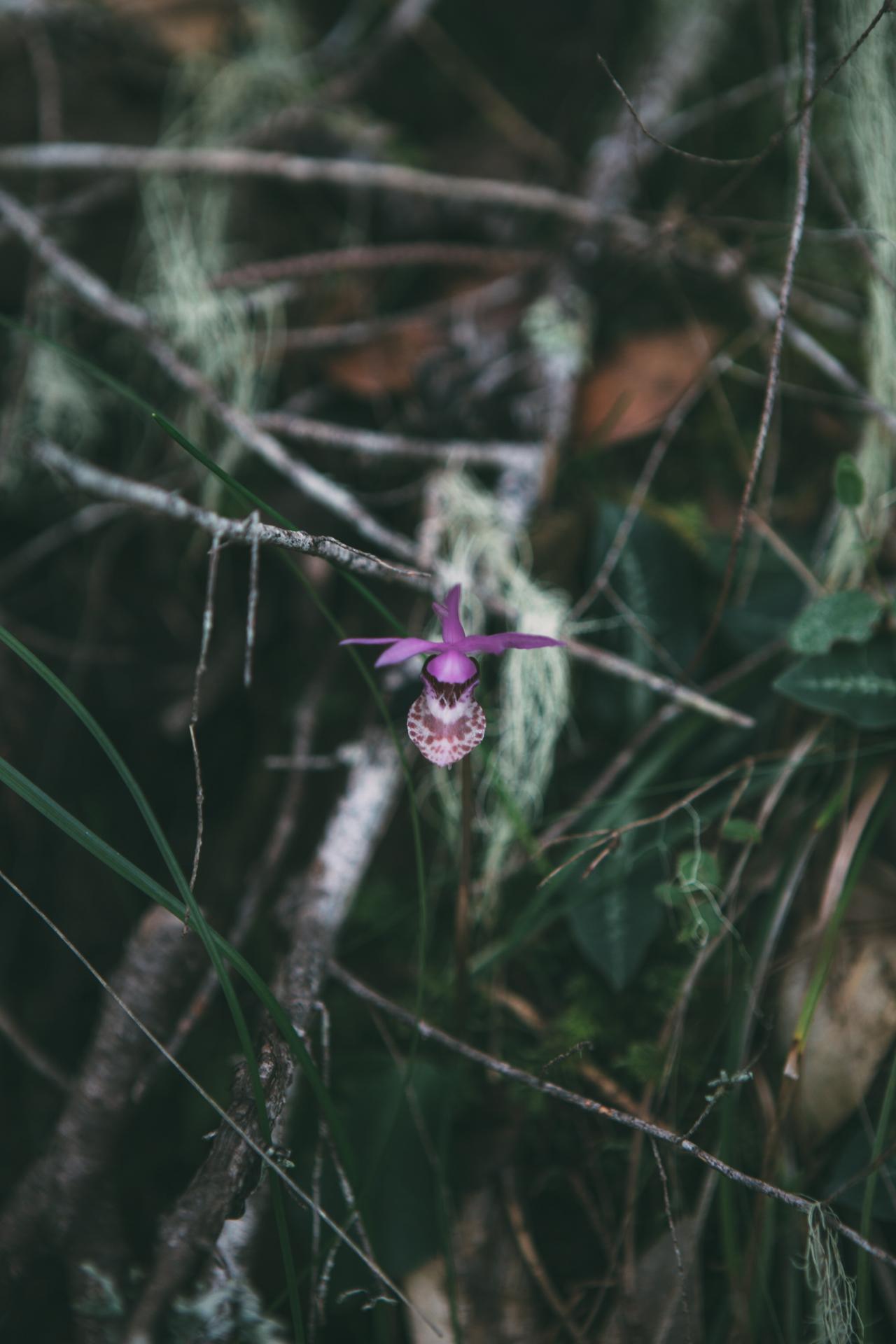 lake-orchid-001_2280.jpg