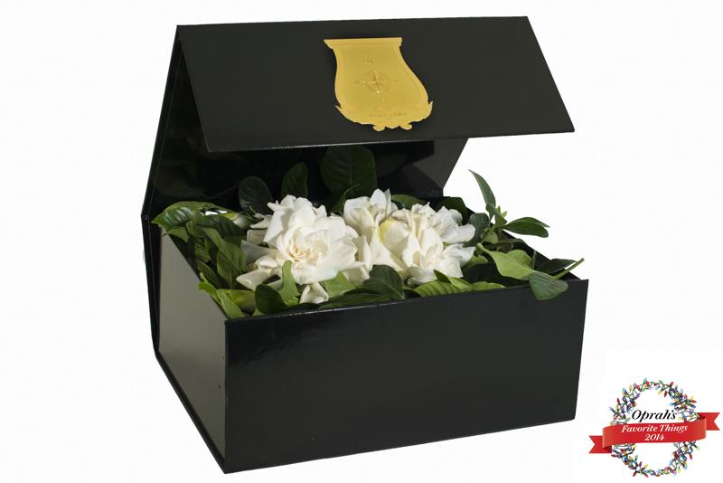 """Deluxe Vine and Bloom Box. """"Oprah's Favorite Things"""""""