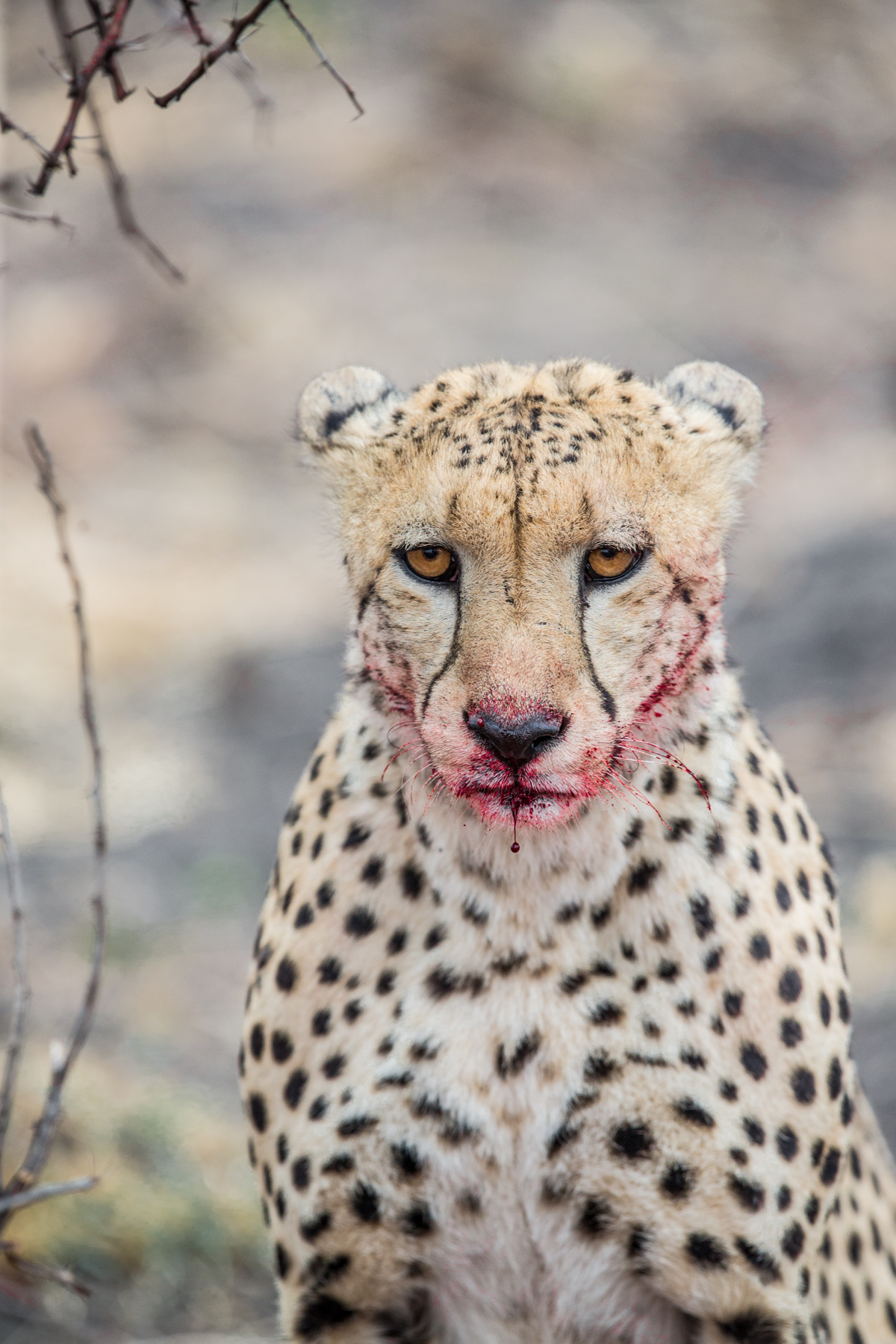 I shot this in the middle of breakfast in South Africa on Safari.