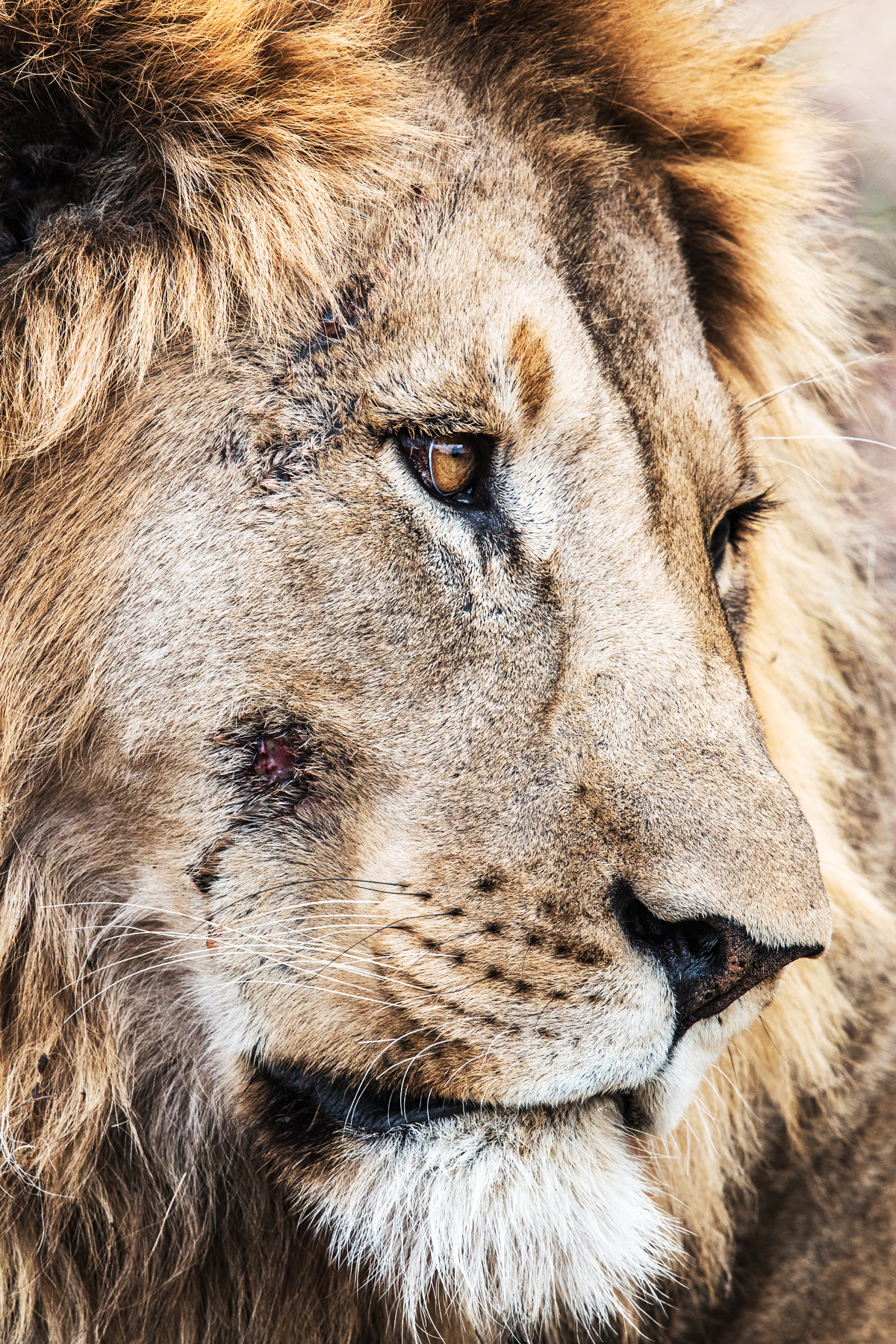 I shot this in South Africa, hi name is Pretty Boy.