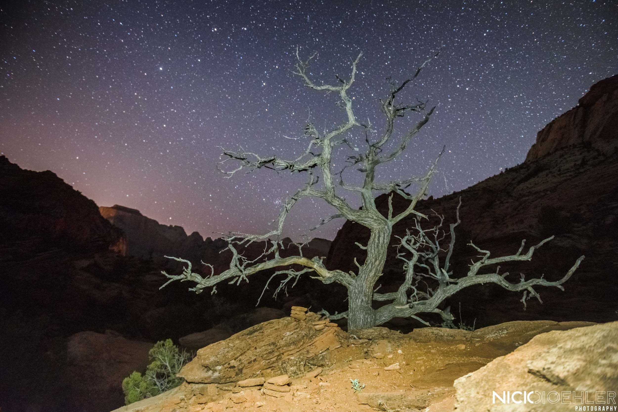 Zion National Park: Starry night over a crazy tree.