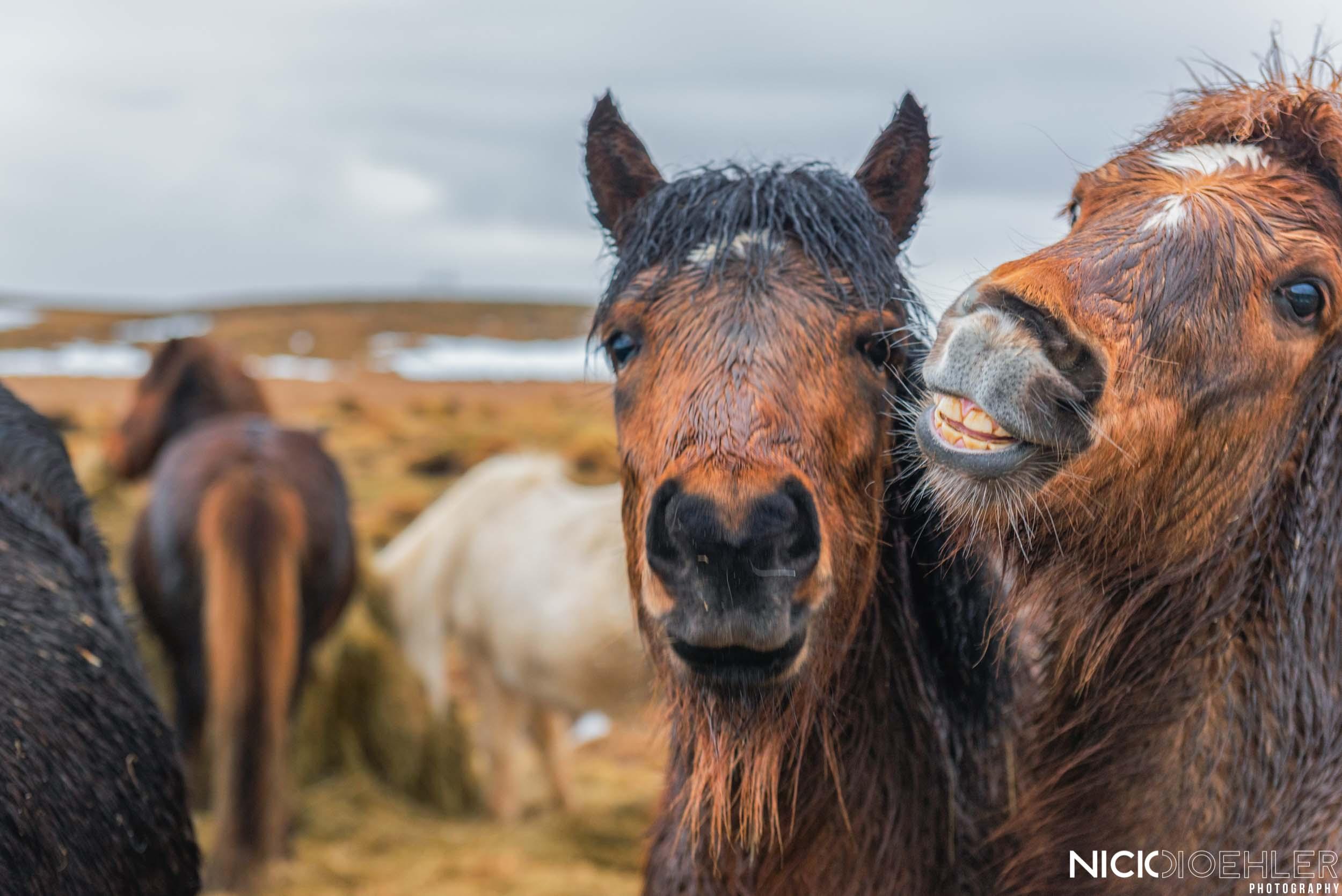 Horse photo-bomb