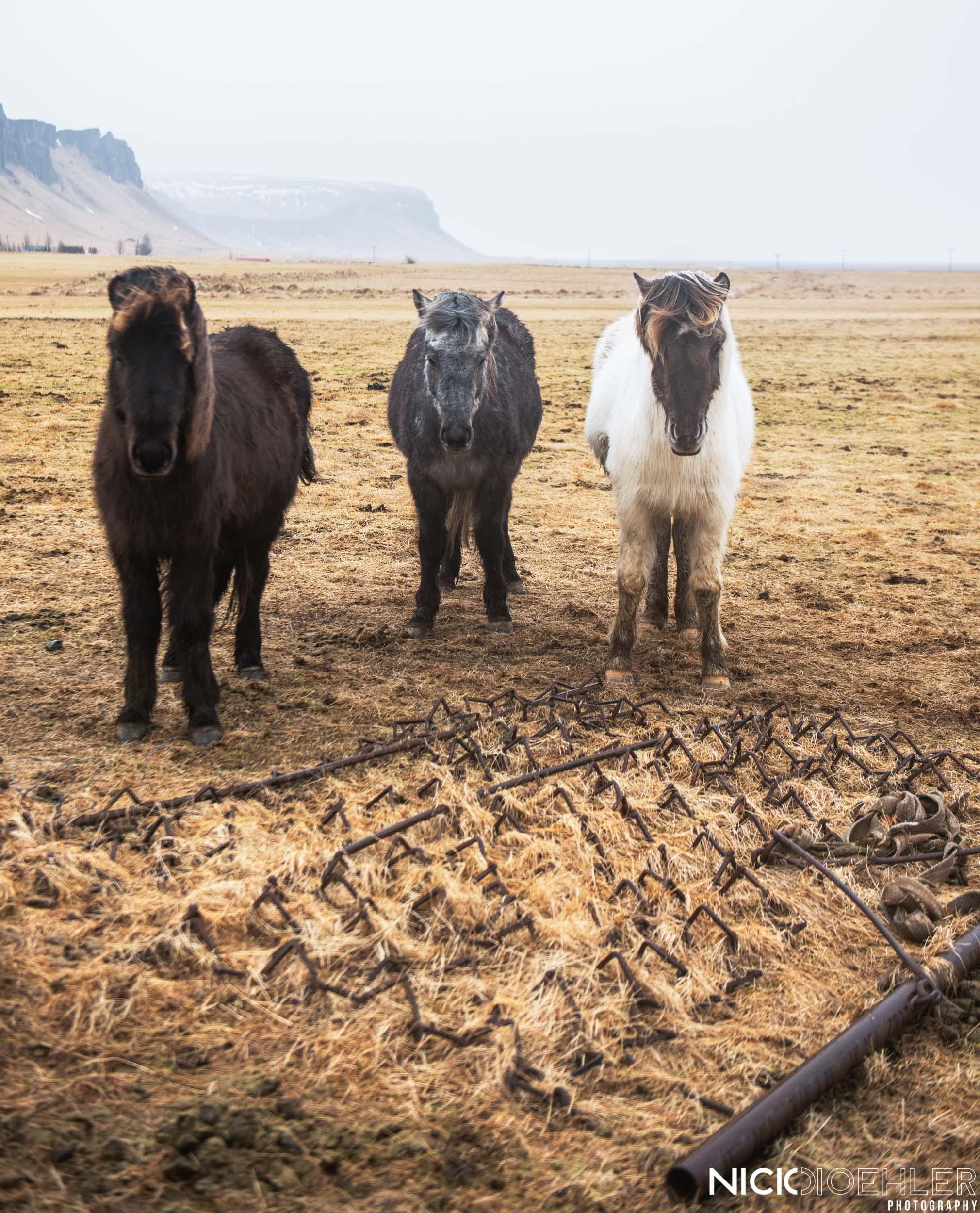 Iceland Horse Farmers