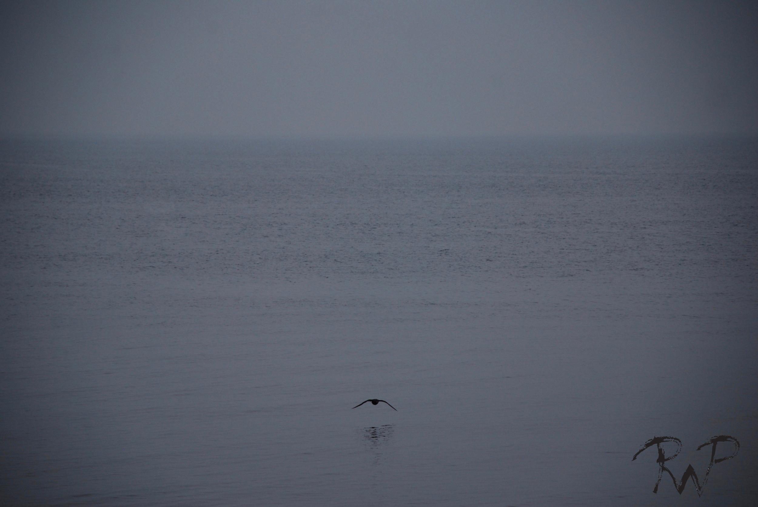 Crow horizon.jpg