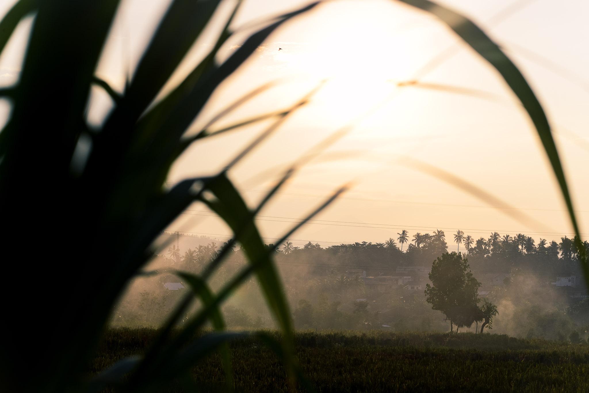 west bali - morning 1 IV