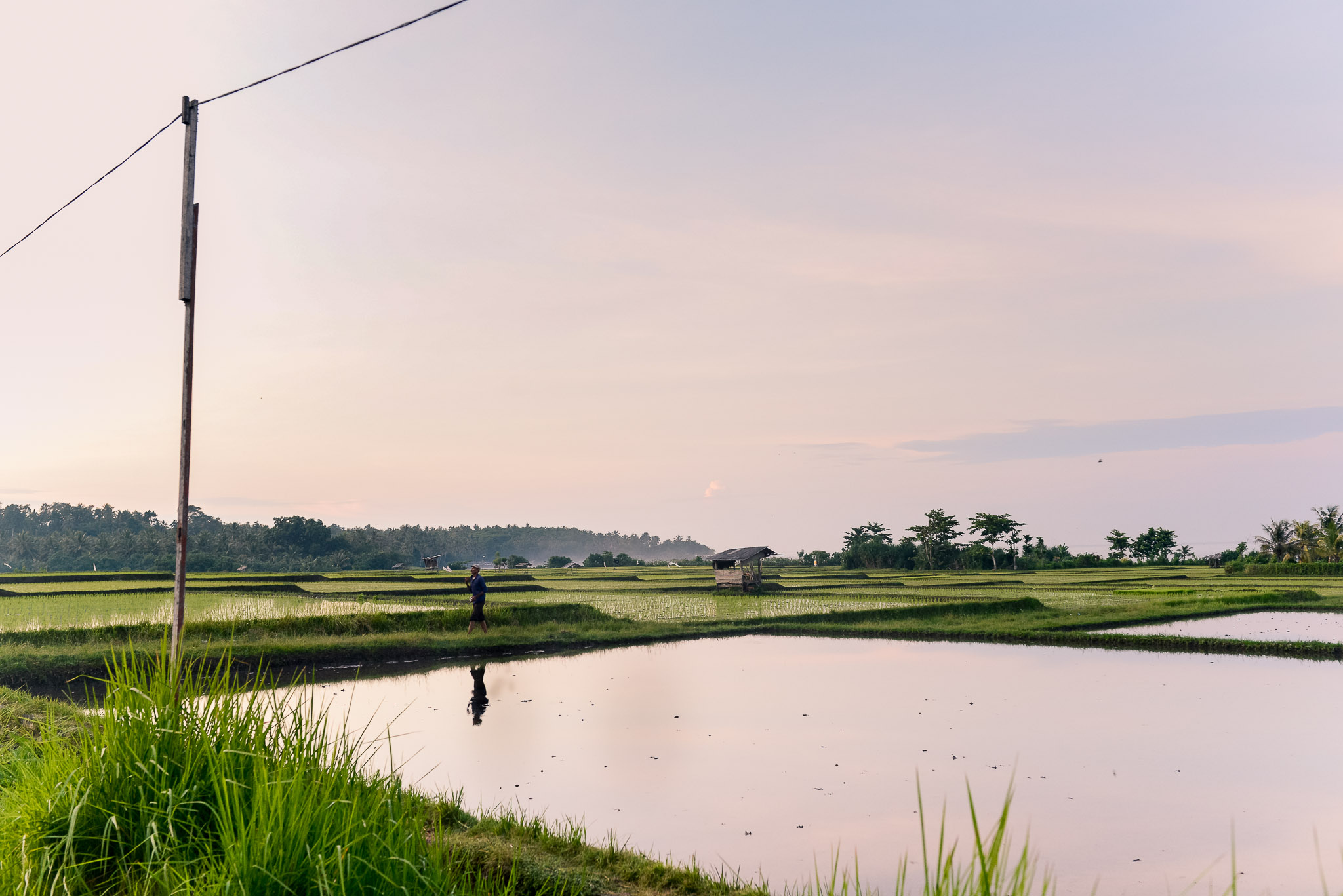 reflections 'n rice II