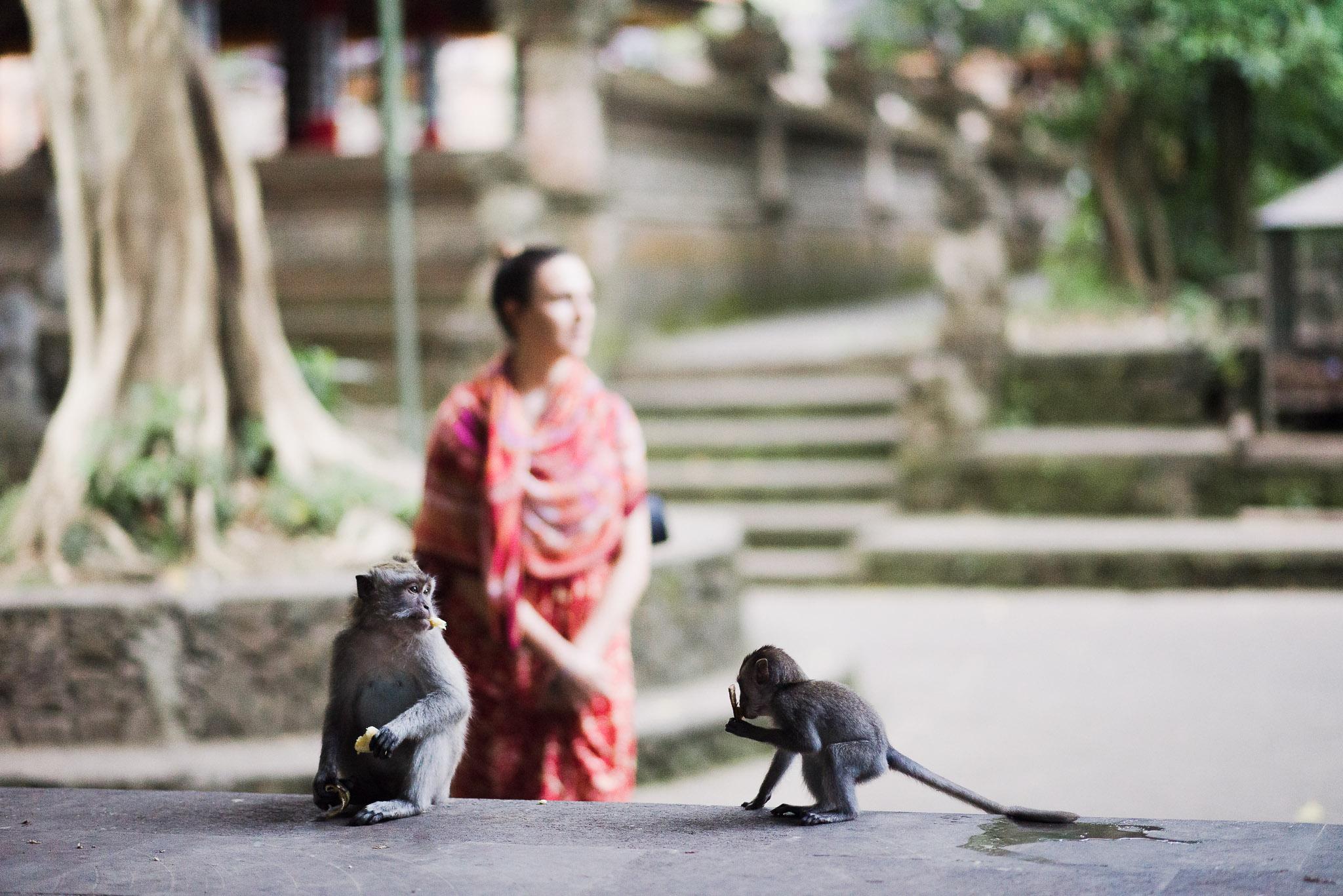 2 monkeys and a mammal