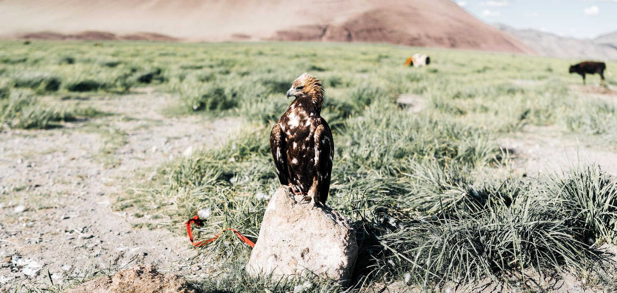 Mongolia Blog (68 of 73).jpg