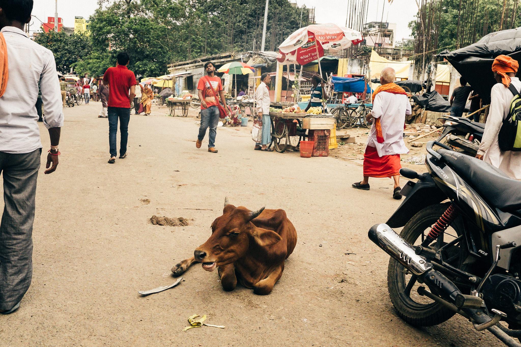 India Photography Blog (17 of 61).jpg