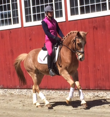 Congratulations to Tova Arnold of Utah on her purchase of Leo!!!! We could not be happier with this match, what a perfect duo! We look forward to hearing all about the successes that this pair will have together :-) !