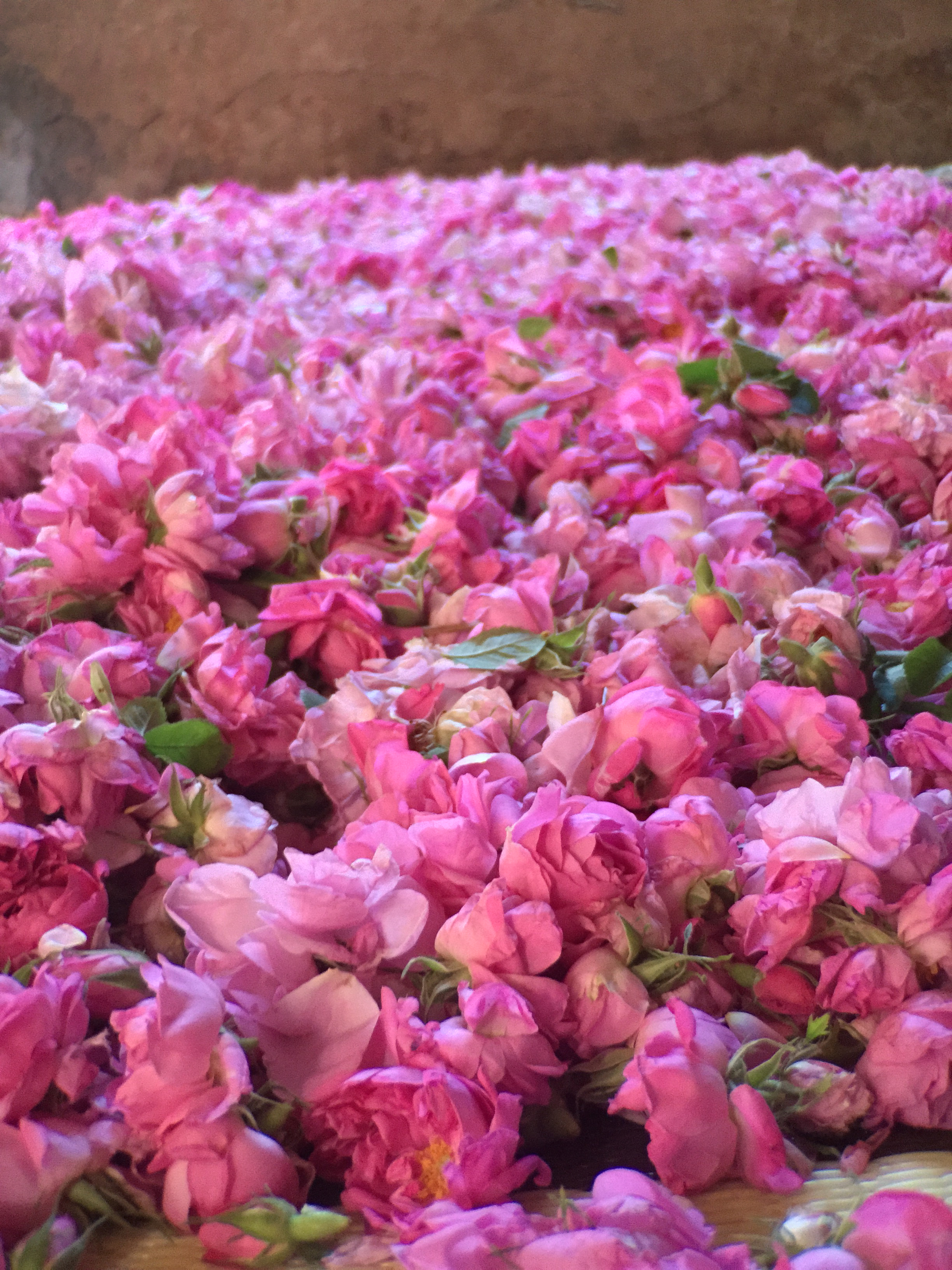 2.pile of roses.jpg
