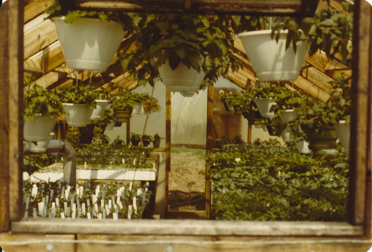 OLD GREENHOUSE EFHIST.jpg