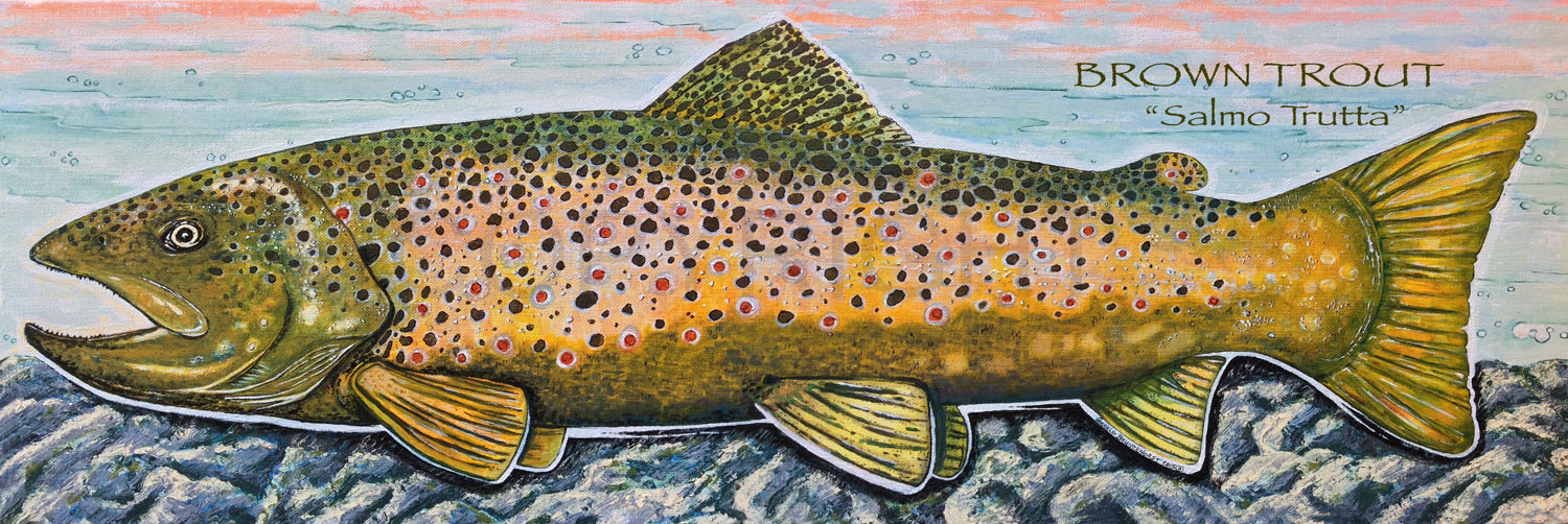 BT_salmo trutta_ with copyright.jpg