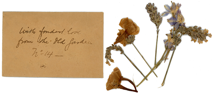 1923 dried flowers from 14 Chenery Place Ipswich, UK.
