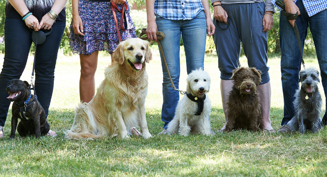 Basic Obedience Class begins June 6th, 11:00 a.m. at Newmarket Farm
