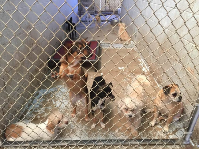 The heartbreak of family dogs living without their families and with very little hope of being adopted if they don't get out.We're coming for you, sweet ones...