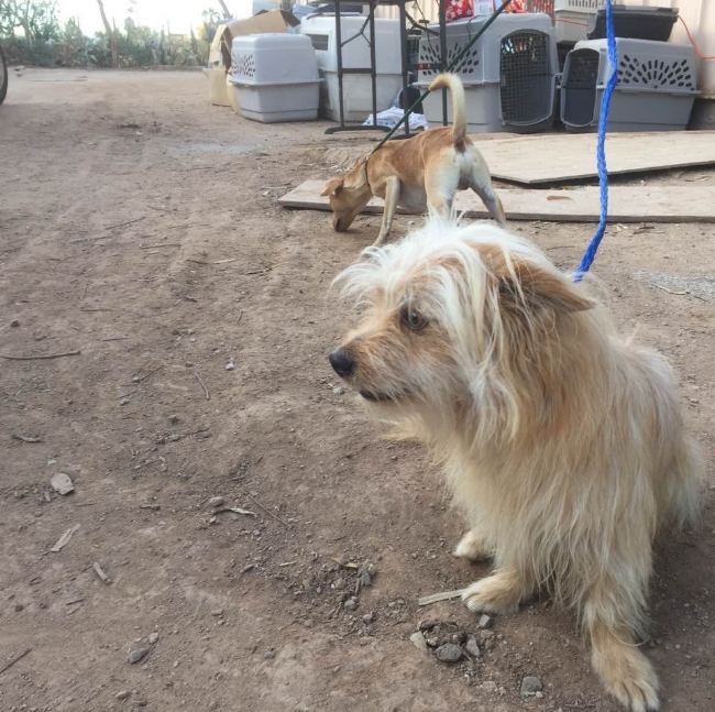 With the extreme heat often exceeding 115ºF, The Humane Society of Imperial Valley needs to find a way out for these dogs as soon as possible.