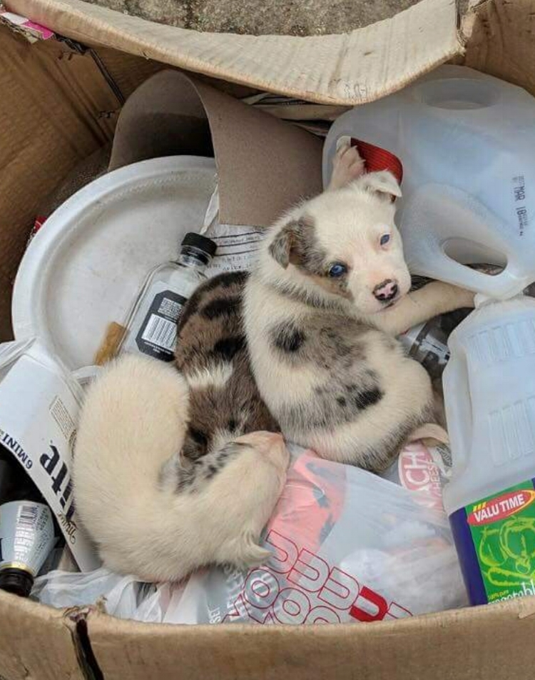 These three puppies were moved from this trash can into the safety of a shelter where they are awaiting transport to San Diego!