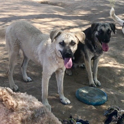 Velma and Daphne have blossomed into beautiful dogs who simply need the right environment to THRIVE.