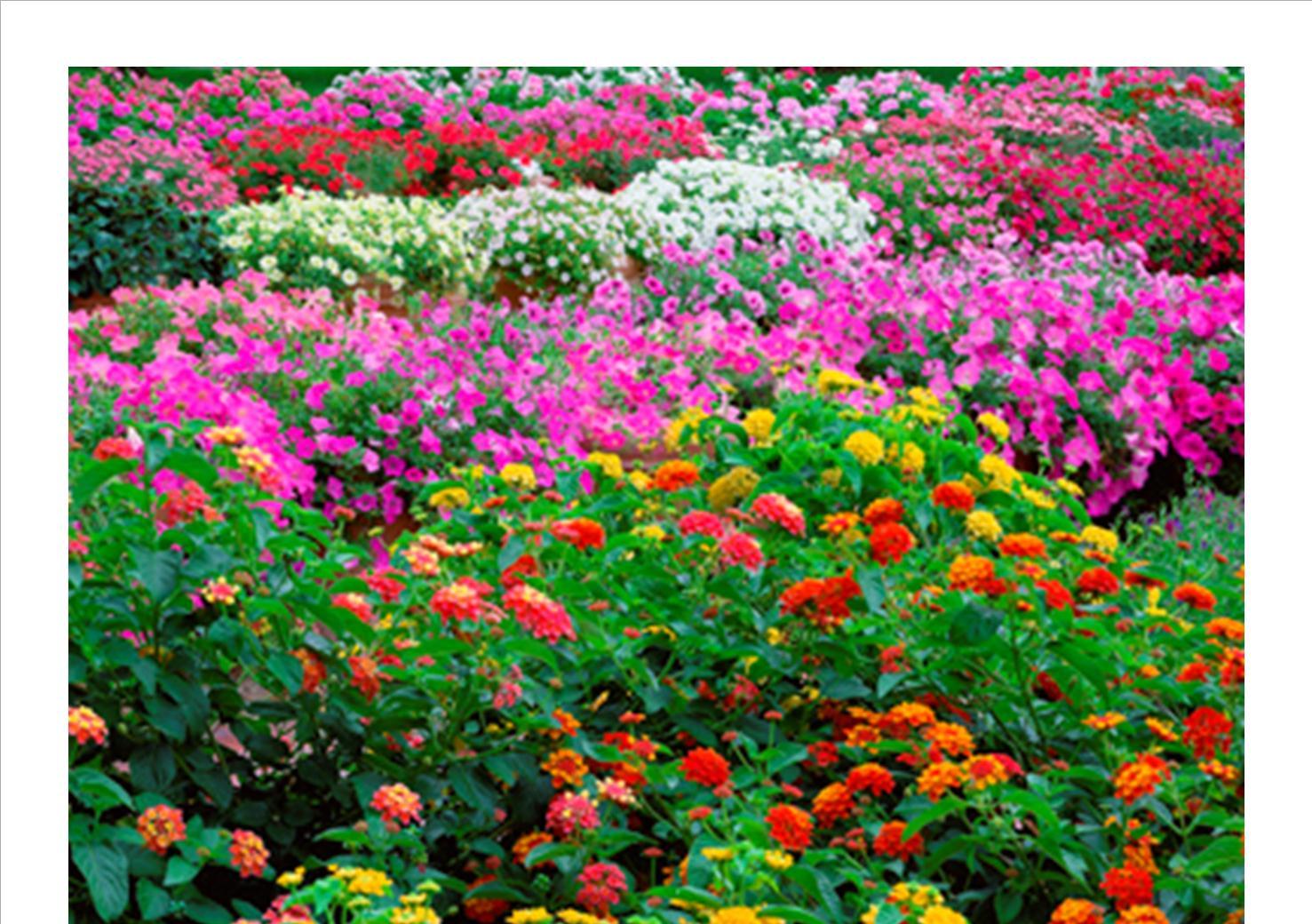 garden grow no words