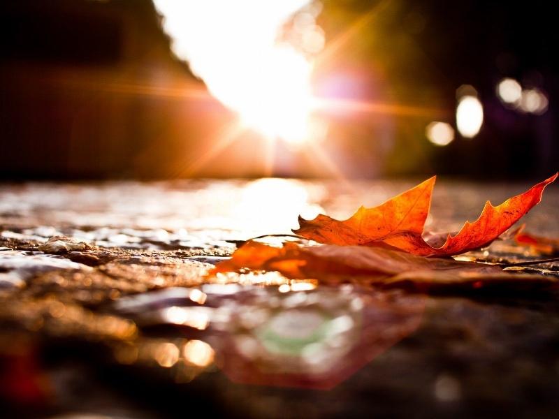 Autumn-Leaves-Sunset-1600x1200.jpg