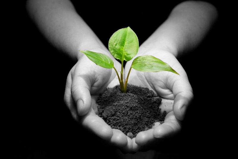 hands-with-plant-dirt4-1200x803.jpg