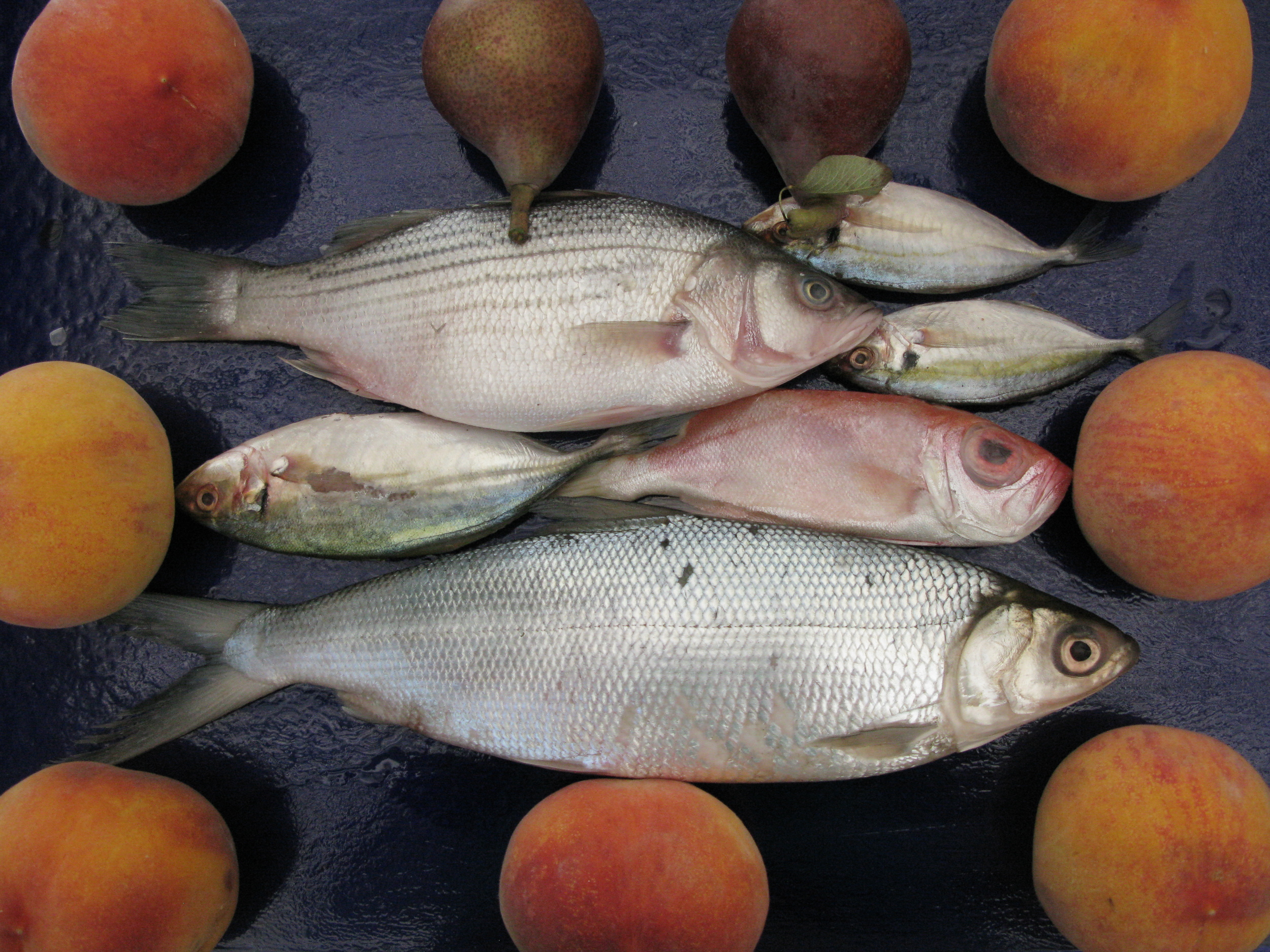 Fish a peaches.