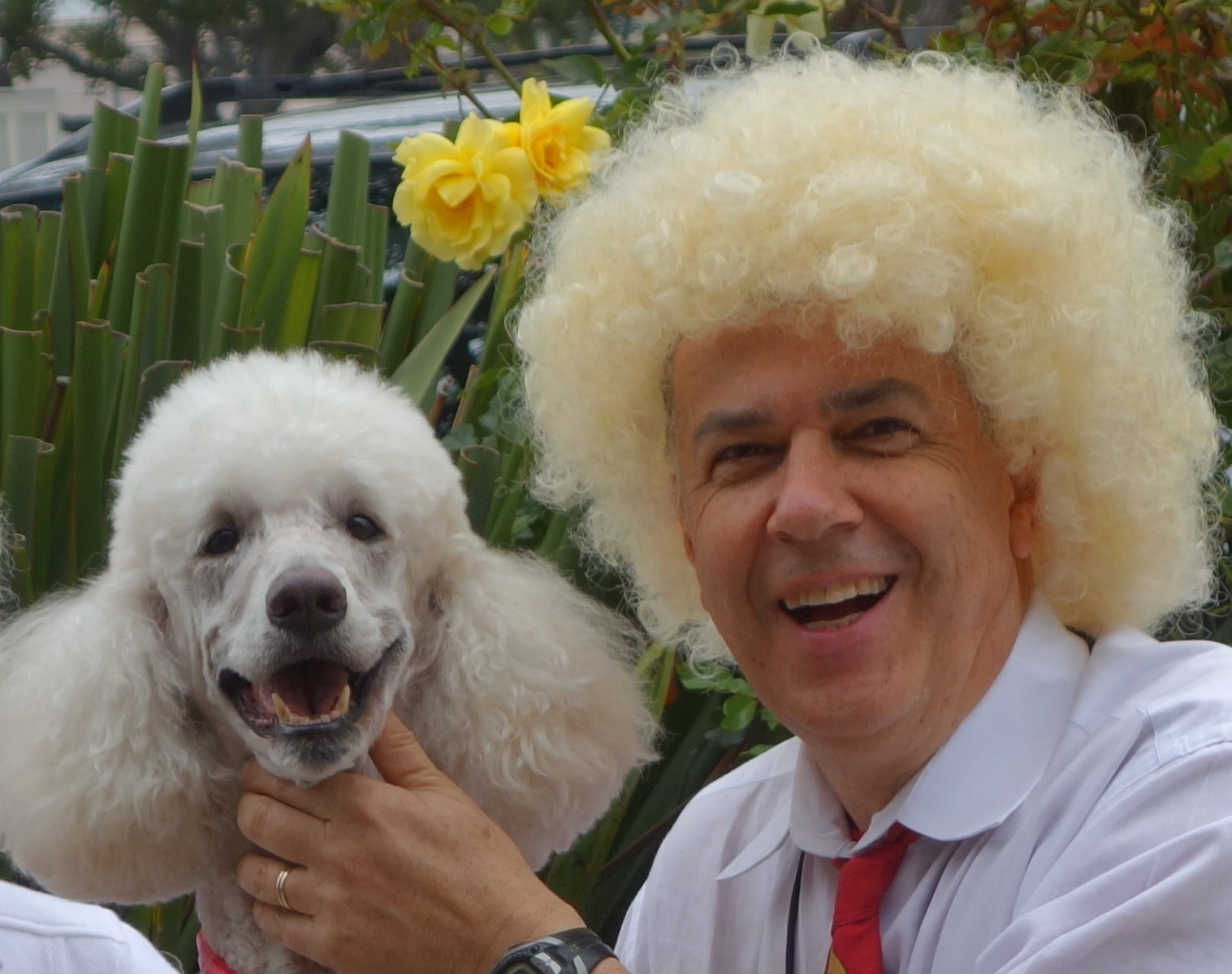 9/2014, Bobo and me in Carmel California, Poodle parade!