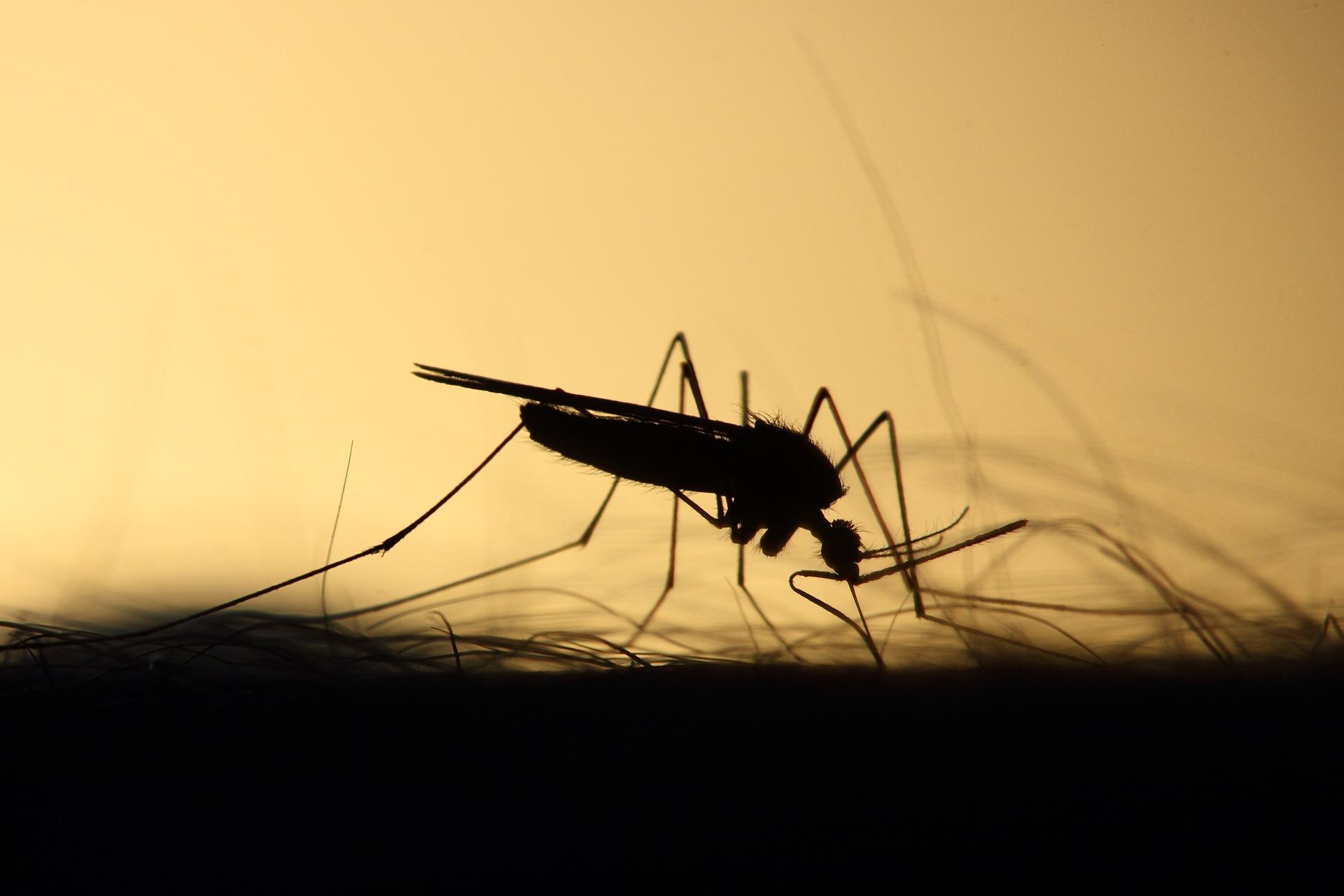 mosquito-3860900_1920.jpg