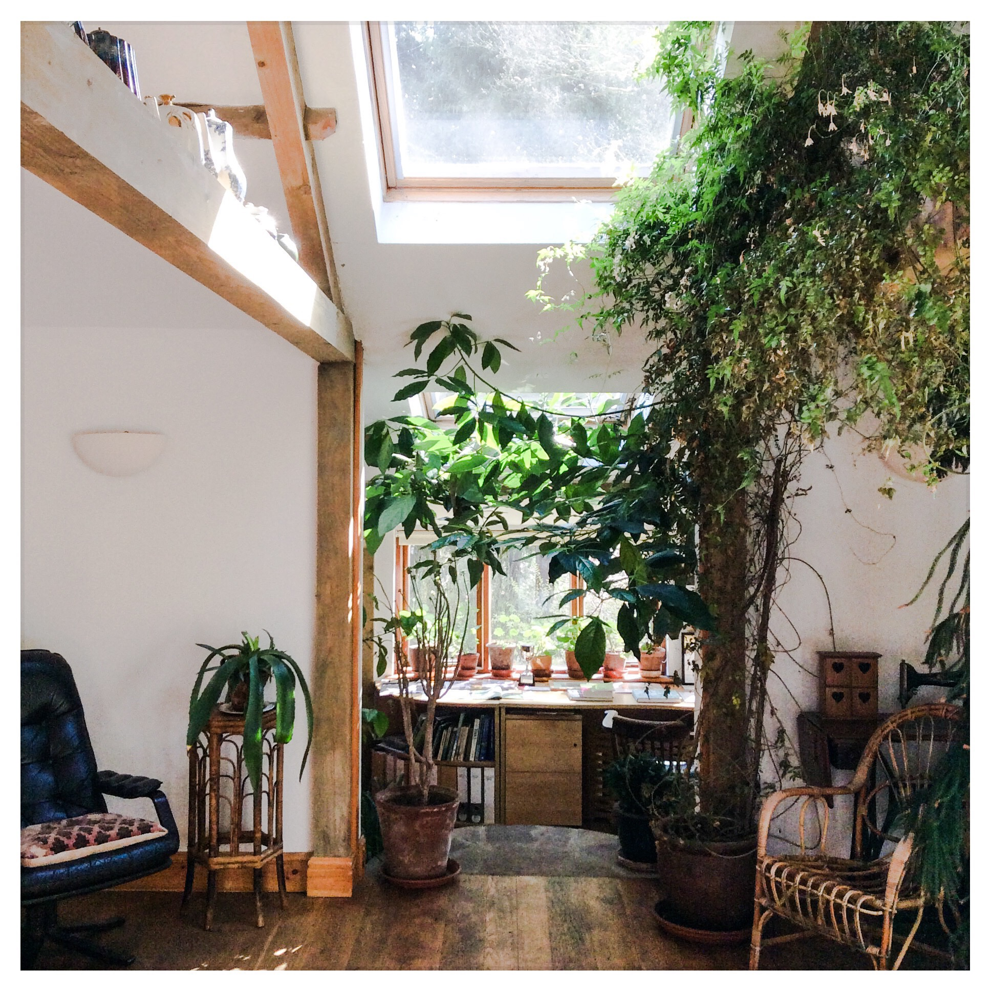 The Garden Room at Nant y Bedd. Full of Jasmine, this is the venue for the June Workshop.