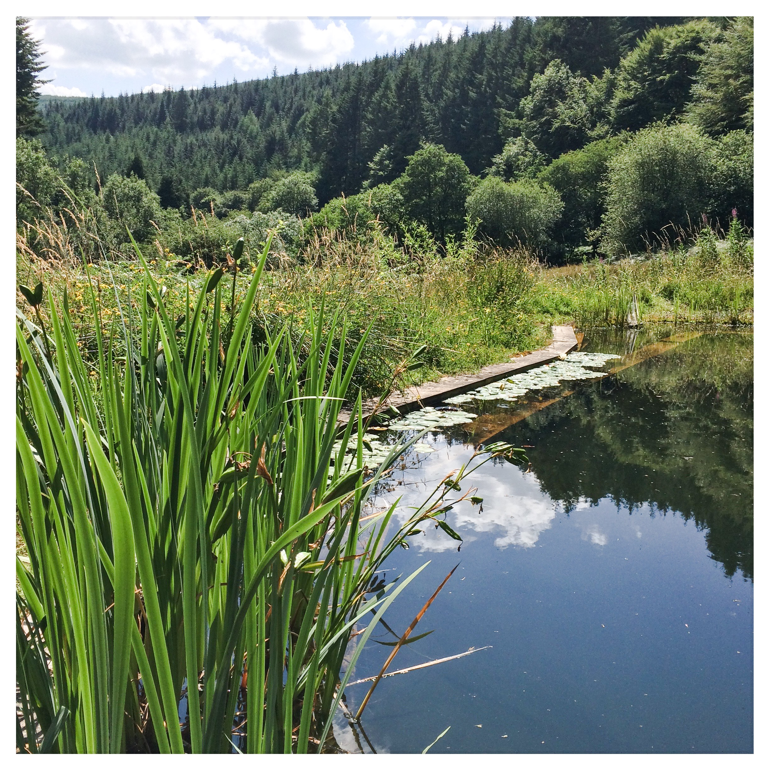 Inspiring views from the wild swimming pool at Nant y Bedd.